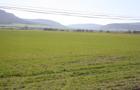 Trigo y cebada del Valle de Losa